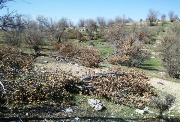 "Joint statement by NGOs and Marivan Environmentalists: ""We will not be silent"""